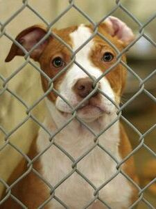 coupons deals offers discounts | animal shelters addison tx
