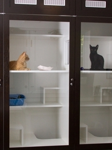 coupons deals offers discounts | cat boarding addison tx