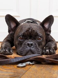 coupons deals offers discounts   dog walkers addison tx