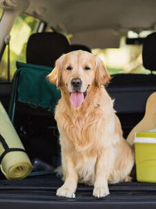 coupons deals offers discounts | pet taxi services addison tx